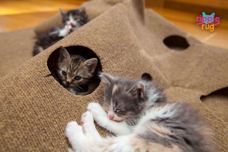 The Ripple Rug Most Versatile Cat